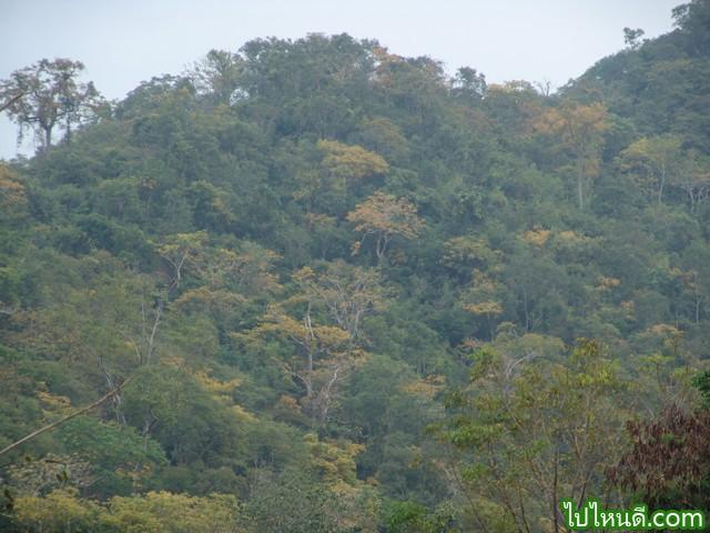 สภาพป่าในเขตอุทยานแห่งชาติเขาใหญ่แบ่งออกๆได้เป็น ป่าเบญจพรรณ ป่าดงดิบแล้ง ป่าดงดิบชื้น ป่าดิบเขา ทุ่งหญ้า และป่ารุ่นหรือป่าเหล่า ซึ่งมีรายละเอียดดังนี้  ป่าเบญจพรรณแล้ง ลักษณะของป่าชนิดนี้อยู่ทางด้านทิศเหนือ ซึ่งมีระดับความสูงระหว่าง 200-600 เมตร จากระดับน้ำทะเล ประกอบด้วยไม้ยืนต้นประเภทผลัดใบ เช่น มะค่าโมง ประดู่ ตะแบก ตะเคียนหนู แดง นนทรี ซ้อ ปออีเก้ง สมอพิเภก ตะคล้ำ เป็นต้น พืชชั้นล่างมีไม้ไผ่และหญ้าต่างๆ รวมทั้งกล้วยไม้ด้วย ในฤดูแล้งป่าชนิดนี้จะมีไฟลุกลามเสมอ และตามพื้นป่าจะมีหินปูนผุดขึ้นอยู่ทั่วๆ ไป  ป่าดงดิบแล้ง ลักษณะป่าชนิดนี้มีอยู่ทางทิศตะวันออก ซึ่งเป็นที่ราบลูกเนินในระดับความสูง 200-600 เมตรจากระดับน้ำทะเลปานกลาง ไม้ชั้นบน ได้แก่ ยางนา พันจำ เคี่ยมคะนอง ตะเคียนทอง ตะเคียนหิน ตะแบก สมพง สองสลึง มะค่าโมง ปออีเก้ง สะตอ ซาก และคอแลน เป็นต้น ไม้ยืนต้นชั้นรองมี กะเบากลัก หลวงขี้อาย และกัดลิ้น เป็นต้น พืชจำพวกปาล์ม เช่น หมากลิง และลาน พืชชั้นล่างประกอบด้วยพืชจำพวกมะพร้าว นกคุ้ม พวกขิง ข่า กล้วยป่า และเตย เป็นต้น  ป่าดงดิบชื้น ลักษณะป่าชนิดนี้เป็นป่าที่อยู่ในระดับความสูง 400-1,000 เมตรจากระดับน้ำทะเลปานกลาง จะมีชนิดไม้คล้ายคลึงกับป่าดงดิบแล้ง เพียงแต่ว่าไม้วงศ์ยางขึ้นอยู่เป็นจำนวนมาก เช่น ยางกล่อง ยางขน ยางเสี้ยน และกระบาก โดยเฉพาะพื้นที่ถูกรบกวนจะพบ ชมพูป่าและกระทุ่มน้ำขึ้นอยู่ทั่วไป พรรณไม้ผลัดใบ เช่น ปออีเก้ง สมพง และกว้าว แทบจะไม่พบเลย บริเวณริมลำธารมักจะมีไผ่ลำใหญ่ๆ คือ ไผ่ลำมะลอกขึ้นอยู่เป็นกลุ่ม ป่าดิบชื้นบนที่สูงขึ้นไปจะมียางปายและยางควน นอกจากไม้ยางแล้วไม้ชั้นบนชนิดอื่นๆ ยังมี เคี่ยมคะนอง ปรก บรมือ จำปีป่า พะดง และทะโล้ ไม้ชั้นรอง ได้แก่ ก่อน้ำ ก่อรัก ก่อด่าง และก่อเดือย ขึ้นปะปนกัน  ป่าดิบเขา ป่าชนิดนี้เกิดอยู่ในที่ที่มีอากาศเย็นบนภูเขาสูง ที่สูงจากระดับน้ำทะเลประมาณ 1,000 เมตรขึ้นไป สภาพป่าแตกต่างไปจากป่าดงดิบชื้นอย่างเห็นได้ชัด ไม่มีไม้วงศ์ยางขึ้นอยู่เลย พรรณไม้ที่พบเป็นไม้เนื้ออ่อน เช่น พญาไม้ มะขามป้อมดง ขุนไม้ และสนสามพันปี และไม้ก่อชนิดต่างๆ ที่พบขึ้นในป่าดงดิบชื้น นอกจากก่อน้ำและก่อต่างๆ ความสูงจากระดับน้ำทะเล 600-900 เมตรเท่านั้น ตามเขาสูงจะพบต้นกำลังเสือโคร่งขึ้นกระจัดกระจายอยู่ทั่วไป ไม้ชั้นรอง ได้แก่ เก็ดล้าน ส้มแปะ แกนมอ เพลาจังหัน และหว้า 