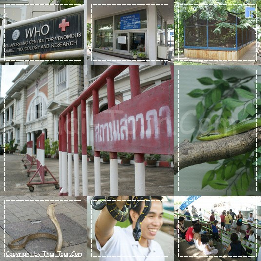 สวนงู เป็นสวนหนึ่งในสถานเสาวภา เปิดแสดงและสาธิตให้ความรู้แก่เยาวชนและนักท่องเที่ยว ทุกวัน
