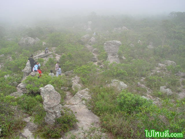 อุทยานแห่งชาติป่าหินงาม ตั้งอยู่ในท้องที่ตำบลบ้านไร่ อำเภอเทพสถิต จังหวัดชัยภูมิ ห่างจากกรุงเทพฯ ไปทางทิศตะวันออกเฉียงเหนือประมาณ 270 กิโลเมตร ห่างจากตัวจังหวัดชัยภูมิประมาณ 100 กิโลเมตร ทุ่งดอกกระเจียว เปรียบเสมือนเป็นราชินีแห่งมวลดอกไม้ของขุนเขาแห่งนี้ ที่ทุกคนตั้งใจมาดู มาชมความงามตระการตา ดอกสีชมพูอมม่วงที่ดารดาษไปทั้งผืนป่า ตัดกับสีเขียวขจีของหญ้าเพ็กและโขดหิน ประดุจเทพจากสรวงสวรรค์ประทานให้กับแผ่นดินที่นี่ เป็นทุ่งดอกกระเจียวที่ใหญ่ที่สุดและงดงามที่สุดในประเทศไทยก็ว่าได้ เมื่อปี พ.ศ. 2536 กรมป่าไม้ได้ทำการสำรวจพื้นที่ใกล้เคียงอย่างละเอียด และพบว่ายังมีพื้นที่ป่าไม้ที่อุดมสมบูรณ์ เมื่อรวมกับพื้นที่เดิมแล้วมีประมาณ 112 ตารางกิโลเมตร หรือ 70,000 ไร่ ซึ่งมีจุดเด่นที่น่าสนใจทางธรณีวิทยาอีกมากมาย สมควรที่จะอนุรักษ์ไว้ในรูปแบบของอุทยานแห่งชาติ จึงได้ดำเนินการจัดตั้งพื้นที่แห่งนี้ให้เป็น