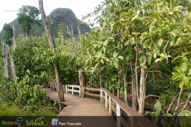 เส้นทางเดินเท้า ศึกษาธรรมชาติ เป็นป่ารกบ้าง ทึบบ้าง สลับกันไป