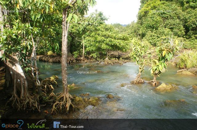 ป่าพรุ คือ อะไร ? ป่าพรุ เป็นประเภทของป่าดิบชื้นประเภทหนึ่ง ที่อยู่ในพื้นที่ราบลุ่ม เกิดจากแอ่งน้ำจืดเกิดขังตัวติดต่อกันเป็นระยะเวลานาน มีการสะสมของชั้นดินอินทรีย์วัตถุ เช่น ซากพืช, ซากสัตว์, เศษซากของต้นไม้ ใบไม้ ต่าง ๆ จนย่อยสลายช้า ๆ กลายเป็นดินพีตหรือดินอินทรีย์ที่มีลักษณะหยุ่นยวบเหมือนฟองน้ำที่มีความหนาแน่นน้อยอุ้มน้ำได้มาก และพบว่ามีการสะสมระหว่างดินพีตกับดินตะกอนทะเลสลับกันชั้นกัน 2-3 ชั้น เนื่องจากน้ำทะเลเคยมีระดับสูงขึ้นจนท่วมป่าพรุ เกิดการสะสมของตะกอนน้ำทะเลถูกขังอยู่ด้านใน พันธุ์ไม้ในป่าพรุตายลงไป และเกิดเป็นป่าชายเลนขึ้นมาแทนที่ เมื่อระดับน้ำทะเลลดลง และมีฝนตกลงมาสะสมน้ำที่ขังอยู่จึงจืดจางลง และเกิดป่าพรุขึ้นมาอีกครั้ง ดินพรุชั้นล่างมีอายุถึง 6,000-7,000 ปี ส่วนดินพรุชั้นบนอยู่ระหว่าง 700-1,000 ปี