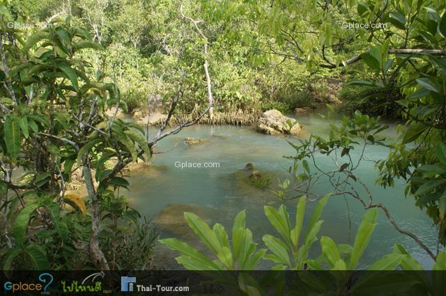 สภาพโดยทั่วไปของป่าพรุ นั้น คือ พื้นด้านล่างจะเป็นพรุมีน้ำขังตลอดทั้งปี น้ำจะมีสีเขียวหรือน้ำตาลเข้ม อันเกิดจากการหมักหมมตัวมาอย่างยาวนานของซากพืช ซากสัตว์ น้ำจะมีสภาพเป็นกรดมากกว่าค่าของน้ำปกติ (PH ต่ำกว่า 7)  ระบบนิเวศในป่าพรุนั้นมีความหลากหลาย และเกี่ยวเนื่องเกี่ยวพันกัน ไม้ยืนต้นจะมีระบบรากแขนงแข็งแรงแผ่ออกไปเกาะเกี่ยวกันเพื่อจะได้ช่วยพยุงลำต้นของกันและกัน และให้ยืนตัวทรงอยู่ได้ ดังนั้นต้นไม้ในป่าพรุจึงอยู่รวมกันเป็นกลุ่ม หากต้นใดต้นหนึ่งล้ม ต้นอื่นจะล้มตามไปด้วย