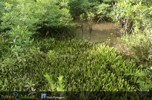 สำหรับในประเทศไทย พื้นที่ที่มีป่าพรุเกิดขึ้นนั้น มักจะเป็นที่ภาคตะวันออกและภาคใต้ตั้งแต่จังหวัดชุมพรลงไป และพบในบางส่วนบ้างของภาคกลาง ในปัจจุบัน พื้นที่ป่าพรุที่มีขนาดใหญ่ที่สุดในประเทศไทย คือ ป่าพรุสิรินธร หรือป่าพรุโต๊ะแดง ในจังหวัดนราธิวาส มีเนื้อที่กว่า 125,625 ไร่