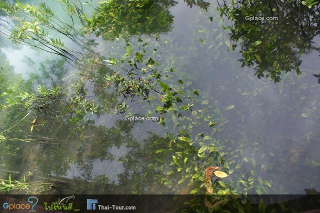ป่าพรุมีน้ำแช่ขังตลอดปี  การไหลเวียนของน้ำเป็นไปอย่างช้า ๆ  กระแสน้ำไหลเอื่อย ๆ   ไม่หยุดนิ่ง  สีของน้ำเป็นสีน้ำตาลคล้ายน้ำชา  เป็นสีของน้ำฝาด (น้ำฝาด คือ น้ำสีน้ำตาลที่ได้จากการสลายตัวของซากพืช)  รสเฝื่อนเล็กน้อย (เผื่อน คือ ฝาดปนเปรี้ยว)  น้ำในป่าพรุมีสภาพความเป็นกรด-ด่าง หรือมีค่า pH = 4.5-6.0 เป็นกรดอ่อน ๆ  สามารถนำมาใช้บริโภคได้ไม่เป็นอันตรายต่อมนุษย์และสัตว์ และเป็นที่อยู่อาศัยของสัตว์น้ำได้เป็นอย่างดี ------------ ภาพ:  พืชใต้น้ำ ใน ป่าพรุ