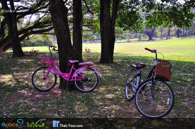 สามารถเช่าจักรยานได้คันละ 20 บาท สำหรับคันเล็ก ส่วนใหญ่ขึ้นมาหน่อย 30 บาท