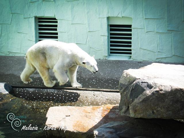 แล้วเราก็ลงมาแตะพื้นด้านล่างตรงโซนสวนสัตว์ก็เดินชมสวนสัตว์กันเลยค่าา พี่หมีขาวน่ารักน่ากอด แต่กลัวโดนฟัด อิอิ