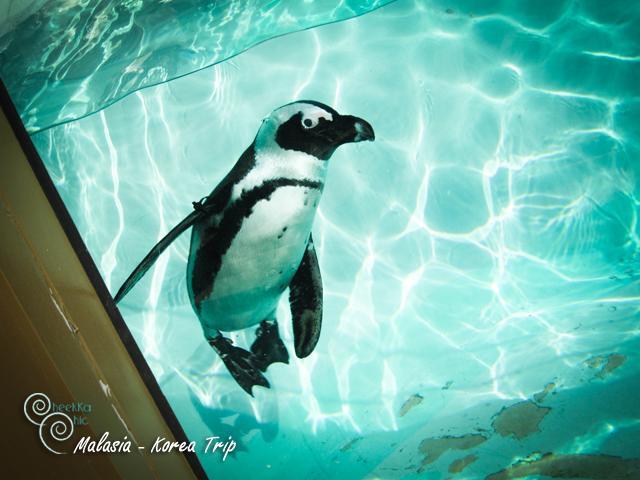 น้องเพนกวิ้นเริงร่าว่ายน้ำท่ามกลางอากาศเย็น คงอากาศดีสำหรับน้องเพนกวิ้นเนาะ
