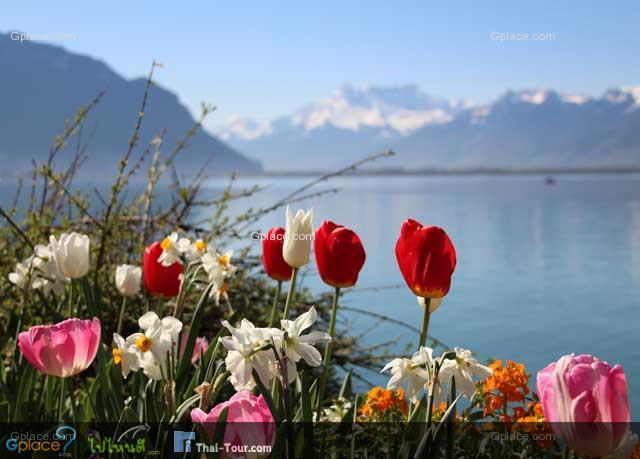 ฝากรูปแบบนี้ไว้หลายภาพหน่อย เพราะไฮไลท์ของการมาพักที่มงเทรอ คือ ริมเลค และสวนดอกไม้ครับ