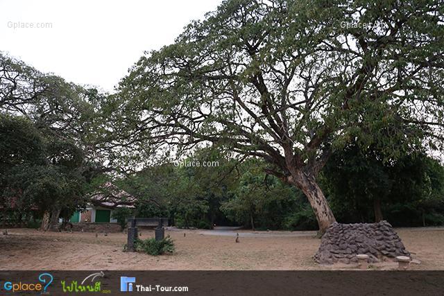 Kosamphi Forest Park