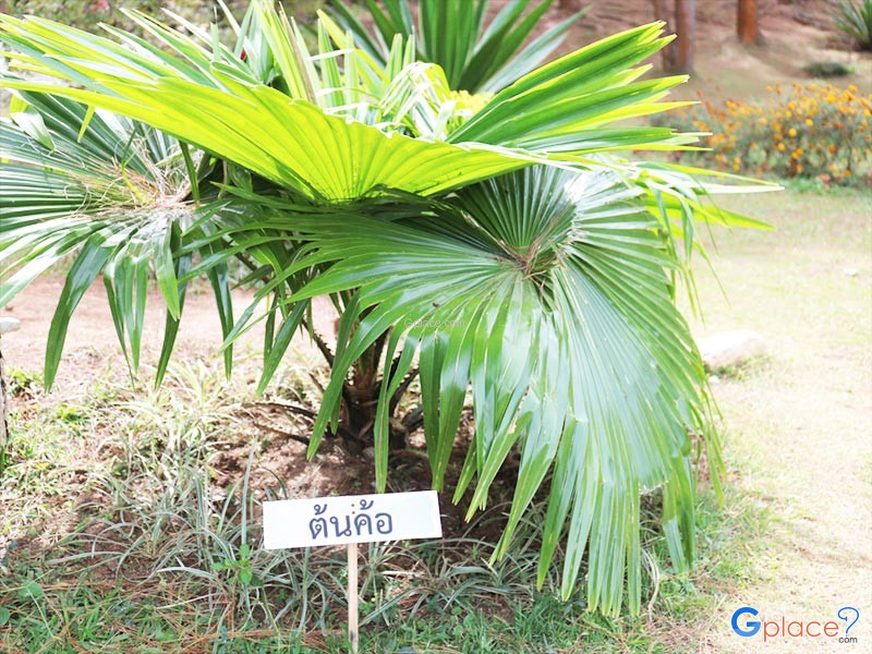 Pratumnak Khao Kho