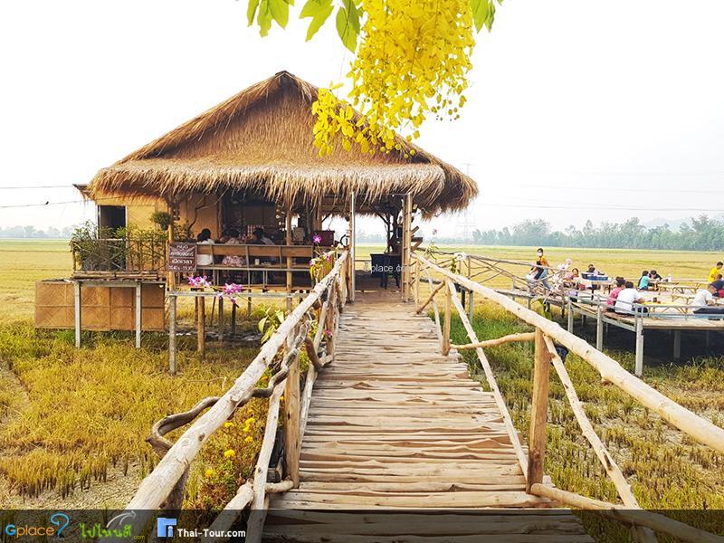 รวม ร้านกาแฟ กลางทุ่ง เมืองไทย