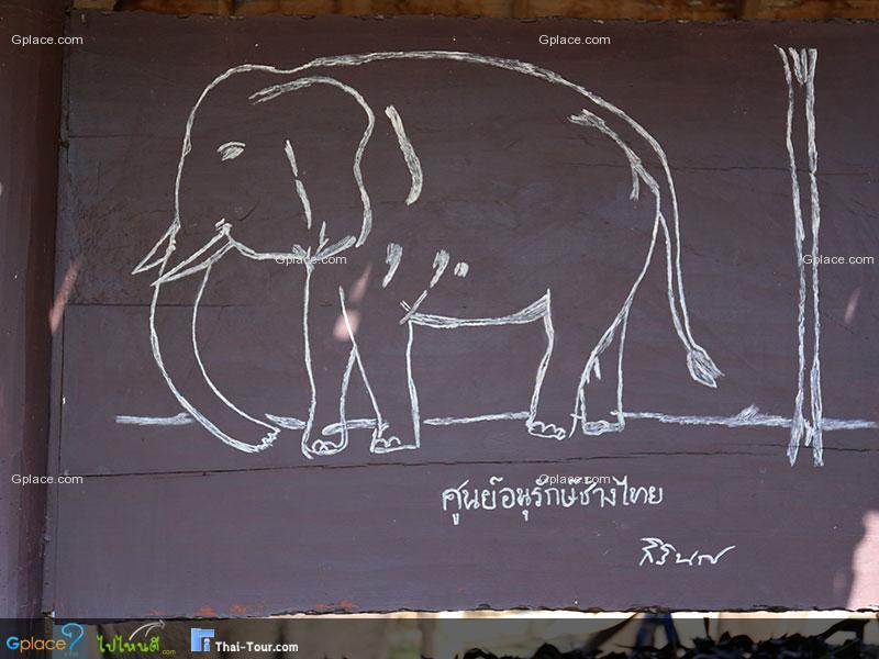 泰国大象保护中心
