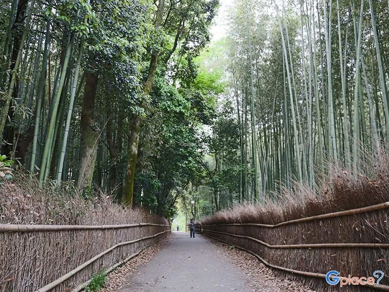 ถนนป่าไผ่ Bamboo Forest
