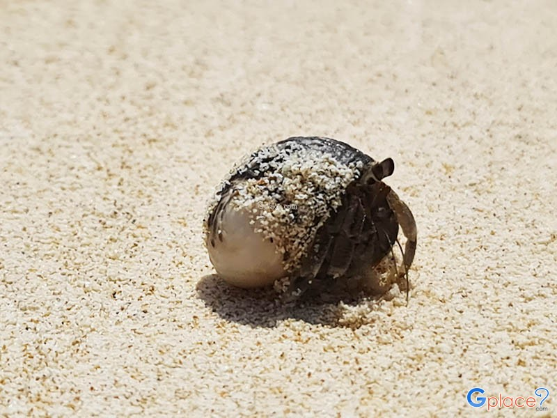 หาดแหลมพันวา