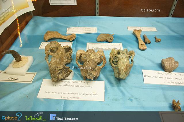 พิพิธภัณฑ์ไดโนเสาร์ สะหวันนะเขต