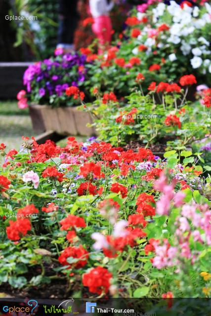 ดอกไม้แข่งกันบานสะพรั่ง สวยงามมากๆ