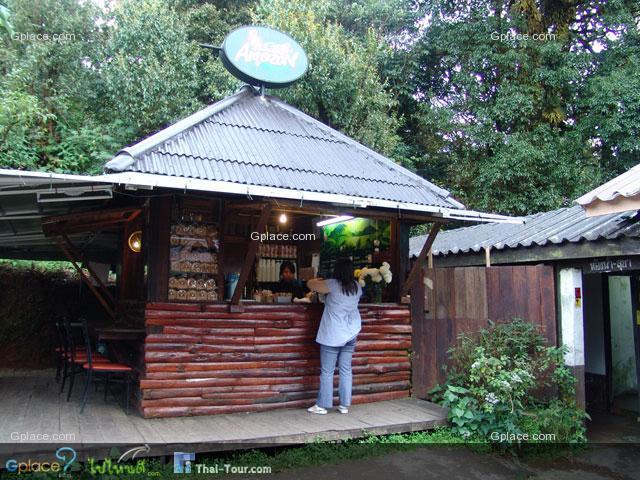 ร้านกาแฟ Amazon Cafe