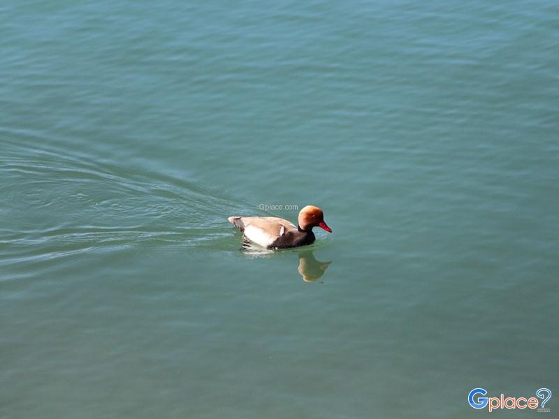 ริมทะเลสาปมงเทรอ