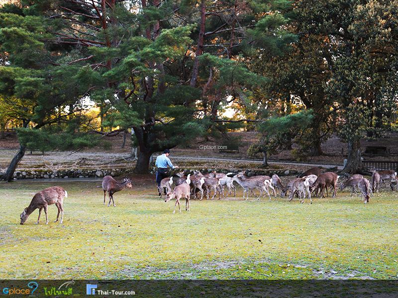 สวนสาธารณะนารา Nara Park