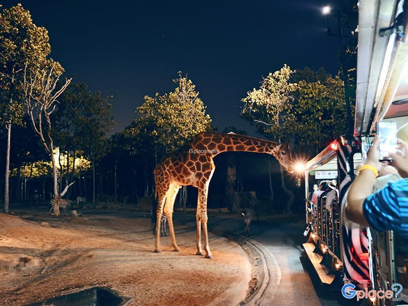 清迈夜间野生动物园