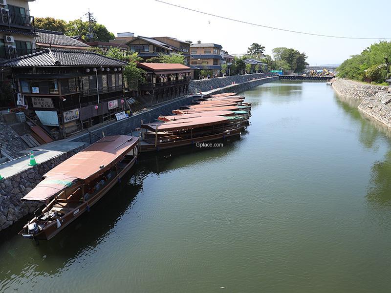 ชมนกกาน้ำจับปลาในแม่น้ำอุจิกาวะ