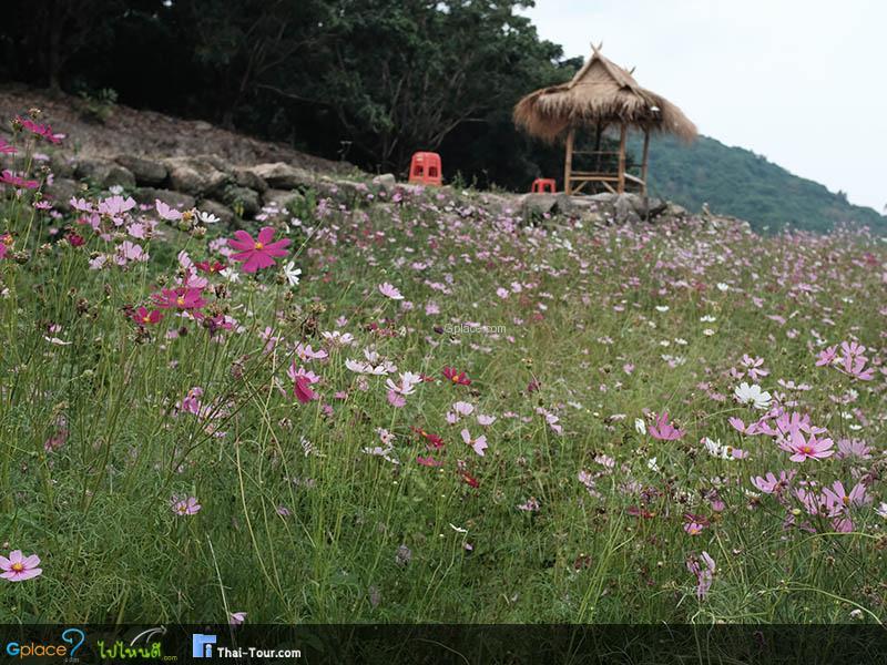 สวนละไม