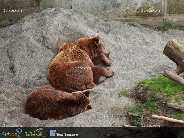 สวนหมีกรุงเบิรน์