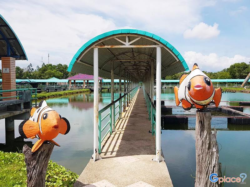 ศูนย์วิจัยและพัฒนาประมงชายฝั่งกระบี่  ปลาการ์ตูน
