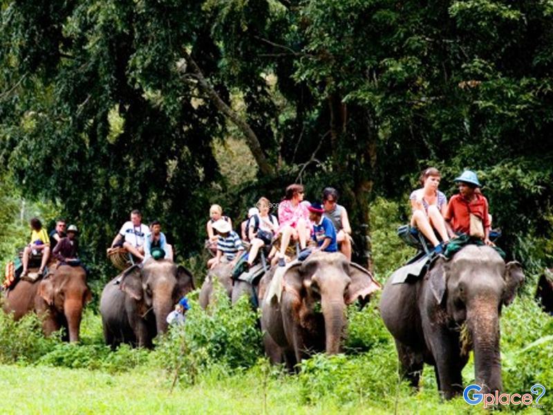 芭堤雅大象村(Pattaya elephant village)