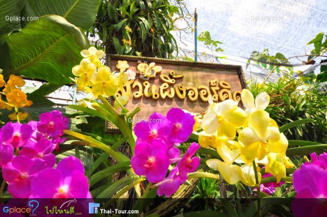 สวนผึ้งออร์คิด