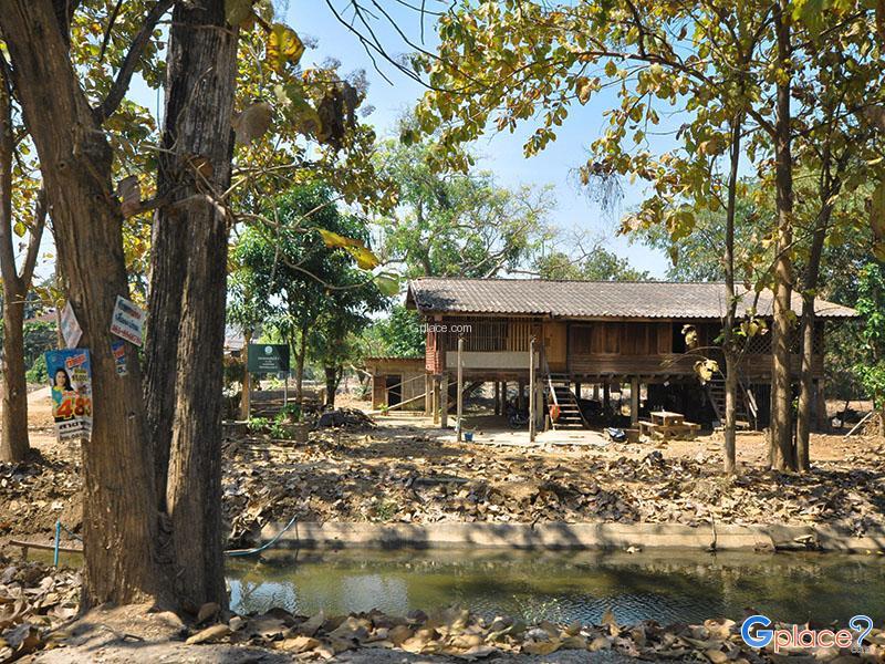 Ban Nong Chang Khun果园