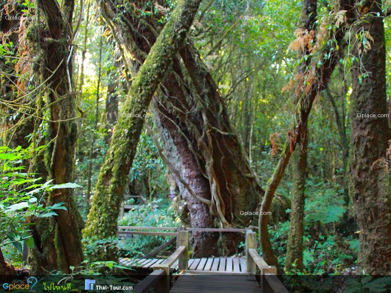เส้นทางเดินศึกษาธรรมชาติอ่างกา