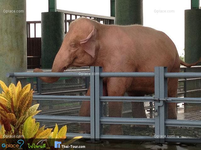 โรงเลี้ยงช้างเผือก