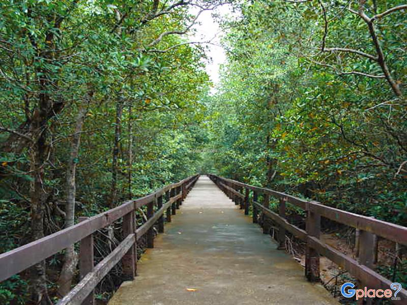 Ngao Mangrove Forest Research Centre