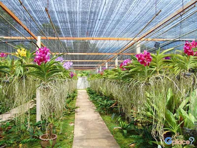 西里蓬兰花养殖园(Siriporn Orchid Farm)