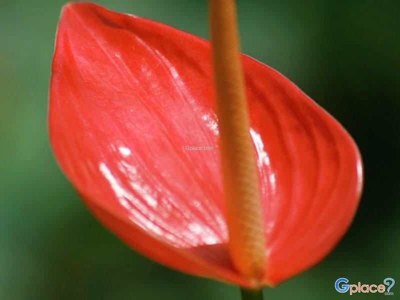 จุดชม ดอกไม้บาน ต้นปี 63