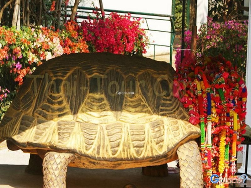 Tortoise Village
