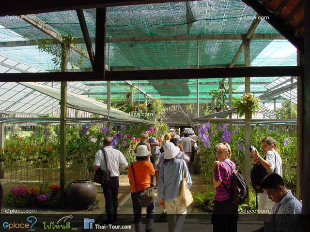 MaeRam Orchid 花园