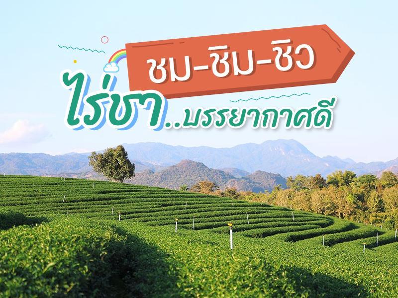 ชม ชิม ชิว ไร่ชา บรรยากาศดี