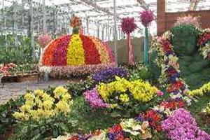 เทศกาลแห่งความรักและดอกไม้ กับสีสันของดอกลิลลี่