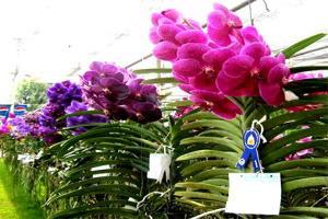 งานแสดงไม้ดอกไม้ประดับจังหวัดลพบุรี